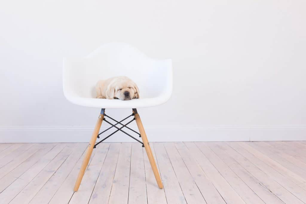 About Merelda Labradors