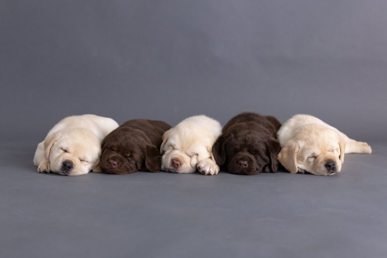 Puppies available……